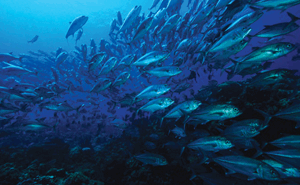 The movement patterns of adult fish can provide information to help guide ...