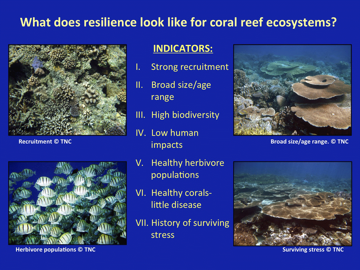 the importance of the preservation of coral reefs Noaa national ocean service education: corals: importance of coral reefs.