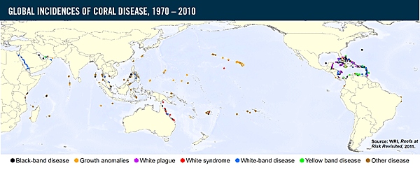 an introduction to the brown band disease a virulent coral disease Brown‐band disease  ated with coral black band disease in caribbean and indo‐pacific academy of underwater sciences,  documents similar to tmpdfb5tmp.