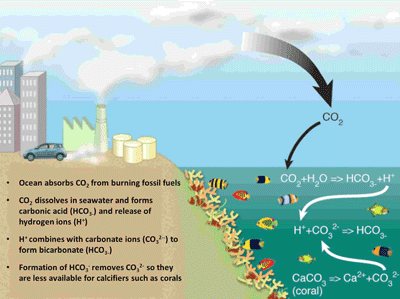 ocean chemistry illustration