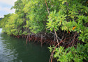 The concept of resilience can apply to any ecosystem including mangrove forests. Coastal mangrove forest in the area of the Sandy Island Oyster Bay Marine Protected Area (SIOBMPA) at Carriacou, Grenada. Sandy Island Oyster Bay Marine Protected Area, designed with the support of the Conservancy, was officially launched by Grenada in July 2010. The new reserve is one of three new marine protected areas the country will launch to help improve the management of the country's marine resources. Grenada and St. Vincent and the Grenadines are located at the Southern end of the Lesser Antilles. Photo Credit: Marjo Aho