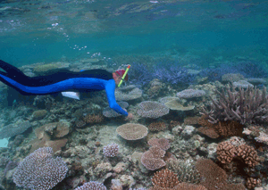Palau's coral reefs have both high species and high habitat diversity. Assessing the biodiversity of the area was a step in the development of the Protected Area Network. Photo © Paul Marshall