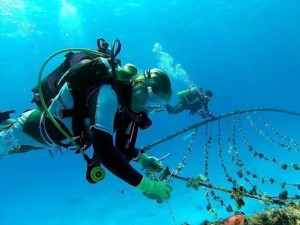 Cleaning a coral nursery. © Reef Rescuers