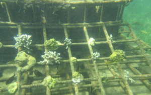 Early view of submerged pilot reef structures in Grenville Bay. © TNC