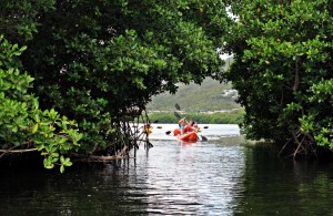 Sea level rise will impact mangrove forests and critical functions that they serve, such as storm surge mitigation. © Brenda Sylvia