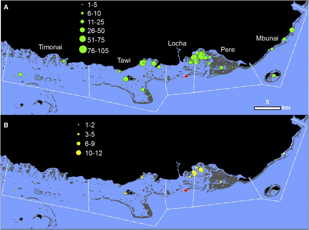 Location and abundance of sampled and assigned juveniles: spatial patterns of coral grouper (A) juvenile sample collection and (B) juvenile parentage assignments. Green (A) and yellow (B) circles are scaled to the number of juveniles. Adults were sampled from a single fish spawning aggregation (red cross), and juveniles were collected from 66 individual reefs (green circles in A). White dashed lines show the customary marine tenure boundaries of the five communities, with the name of each community in white (A). Land is black, coral reefs are gray, and water is blue (Almany et al. 2013).