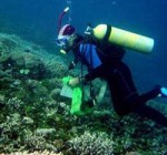 Monitoring reef resilience. Photo © TNC
