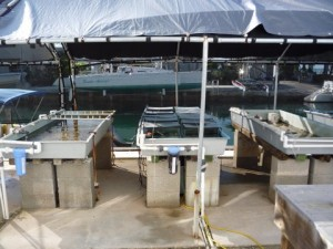 Outdoor land-based coral nursery facility at Mote Marine Lab, Summerland Key, Florida. Photo © Dave Vaughan