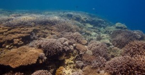 Chumbe Reef, live-coral dominated area. Photo: Chumbe Island Coral Park