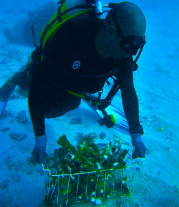 Transporting coral fragments. © Reef Rescuers