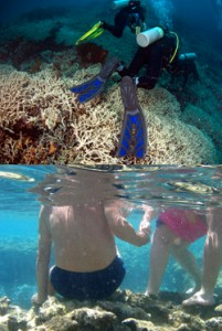 Top: Careless diver damaging corals in Manado, Indonesia. Photo © Shen Collazo/Marine Photobank Bottom: Tourists trample over the reef in Ras Mohammed National Park, Egypt. Photo © Howard Peters/Marine Photobank 2011