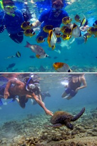 Top: Tourists feeding native coral reef fish in Hawaii. Bottom: A snorkeling tourist reaches to touch a sea turtle in Hawaii. Photos © Ziggy Livnat, For the Sea Productions/Marine Photobank