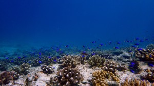 A coral transplantation site at Cousin Island Special Reserve. © Reef Rescuers