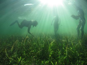 Monitoring seagrass beds. © Nimpal Channel MCA.