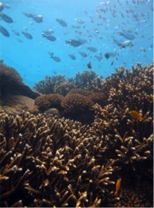 A coral-covered reef crest at Sloping Island. Photo © Great Barrier Reef Marine Park Authority