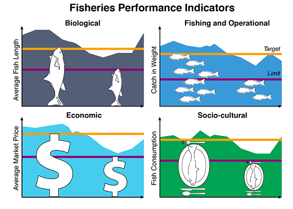 There are many ways to measure the social, biological, economic, and operational performance of a fishery. Fishery managers often use harvest control rules to indicate when and how much to adjust management when indicators change (for better or for worse). Managers aim to keep indicators at the Target Reference Points (orange). Harvest control rules typically become more restrictive if certain thresholds, such as Limit Reference Points (purple), are not being achieved.
