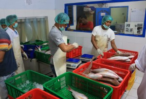 Workers in processing plant sort, weight, and measure deepwater snapper and grouper, Indonesia. Photo © Jeremy Rude/TNC