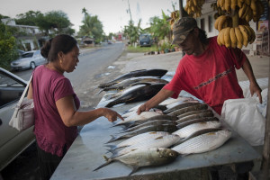 Reef fish on display at one of the fish market stalls in Kolonia, the capital city of Pohnpei. Photo © Nick Hall