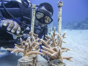 Fragmenting corals in Cane Bay, St. Croix. Photo © Lisa Terry/The Nature Conservancy