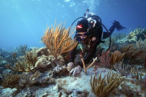 Outplanting staghorn coral in Dry Tortugas National Park. Photo © Carlton Ward