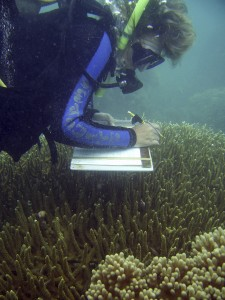 Conservancy marine scientist, Alison Green surveying coral during a rapid ecological assessment (REA) in the area of Manus Province, North Bismarck Sea, Papua New Guinea. The coral reefs of Papua New Guinea (PNG) are among the most species-diverse in the world and an important source of food and income for communities. © Louise Goggin