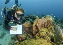 Surveying corals in St. Croix in the Virgin Islands. Photo © John Melendez
